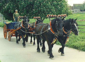 Horses and cart in Rottingdean - dressed the way they would have been for Hollering Pot